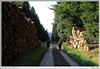Cesta kolem dřeva