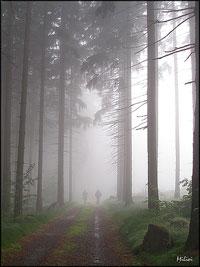 Cesta se ztrácí v mlze