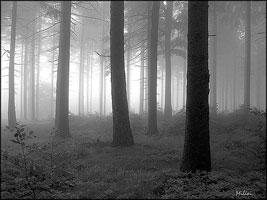 Zamlžený les