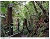 Zélandský les