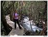 Cesta podél potoka